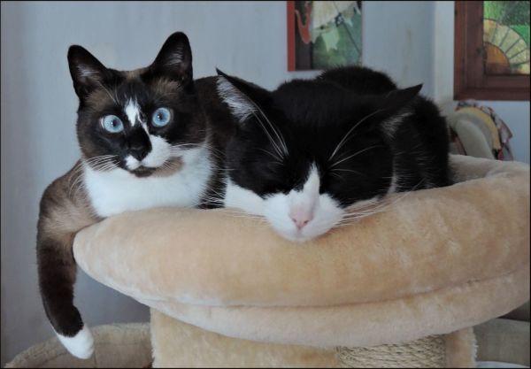Xena & Felix on The Cat Tower o(^・x・^)o (=´∇`=)