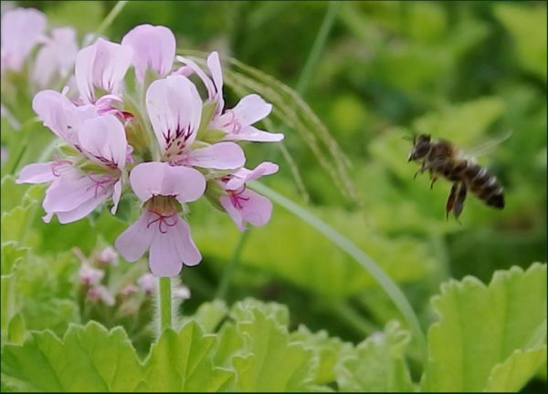 Summer Plant & Honey Bee