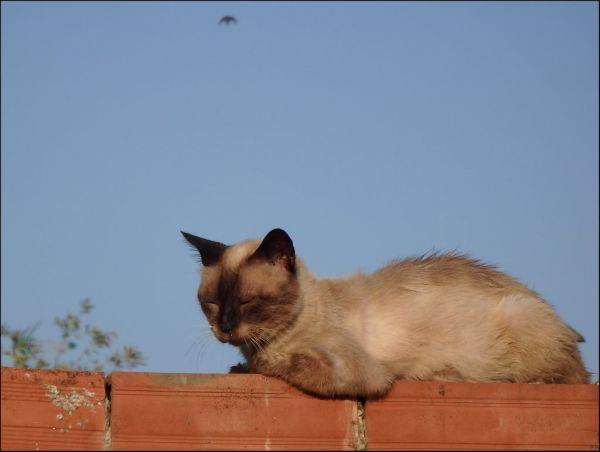 Cat on a Brick Wall - La Font d'En Carròs