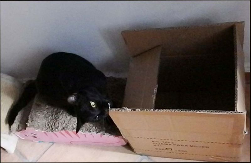 Mai's Fascination -  Cardboard Box