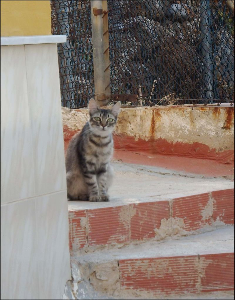 Tabby Cat in the Village - La Font d'En Carròs