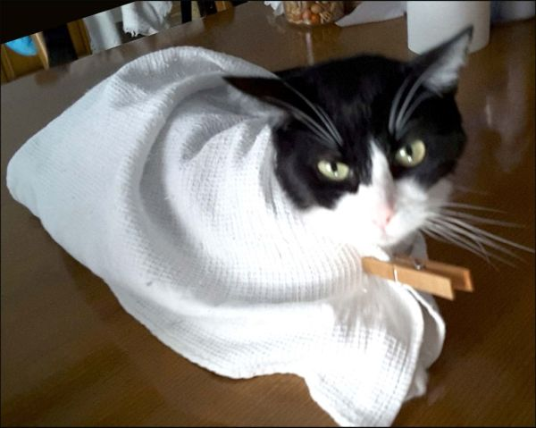 Felix is Relieved to be Wrapped in Cloth