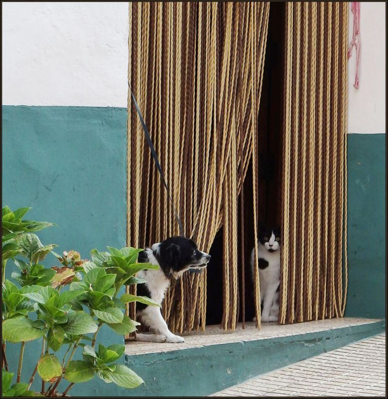 House Cat and Guard Dog in Benialí