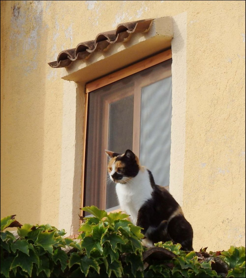 Cat on The Roof of The House With Ivy