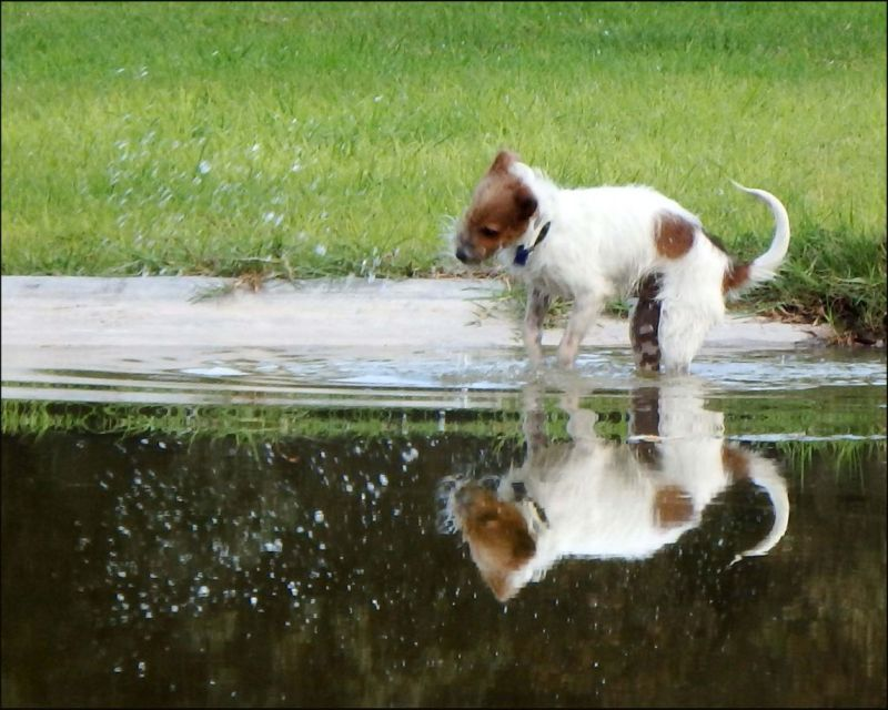 Dog  -  Playing with Water