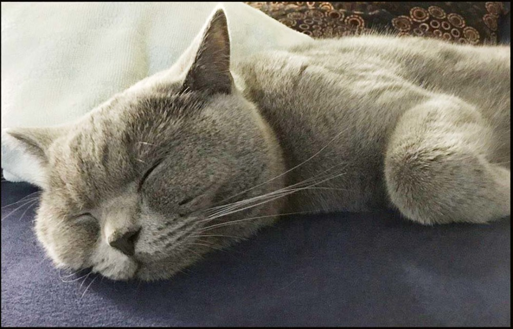 Buri - a Sound Sleep(= ̄ω ̄=)