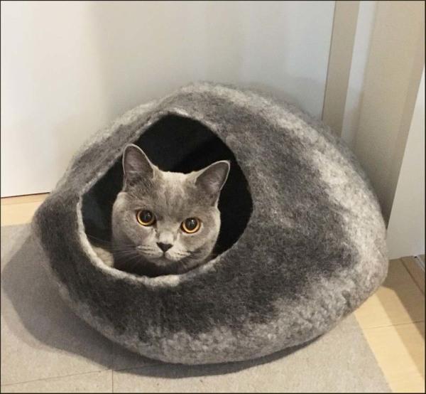 Buri's New Cat House(●ↀωↀ●)