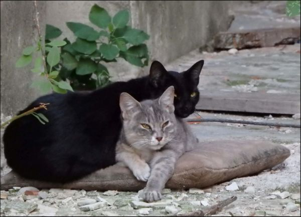 Sunbathing Cats in A Vacant Site
