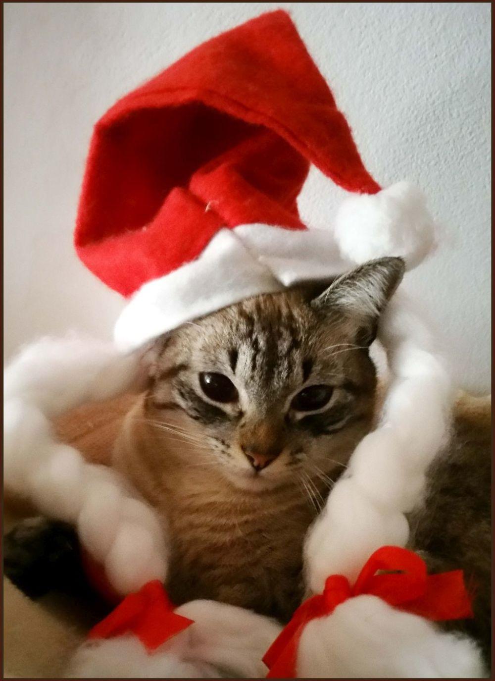 Merry Christmas V(=^・ω・^=)v