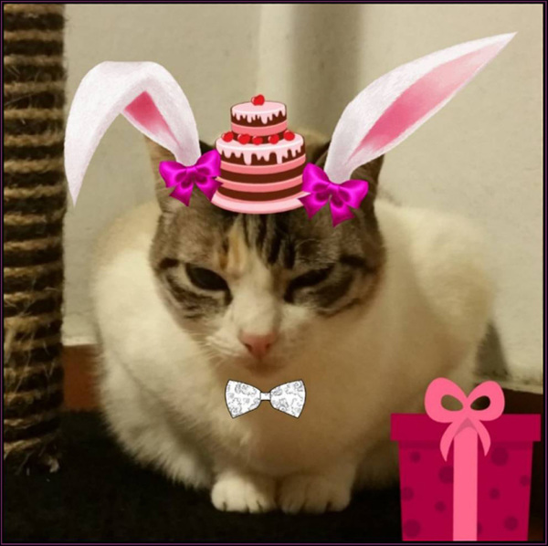 Birthday Cat Coco ~(=^・ω・^)_