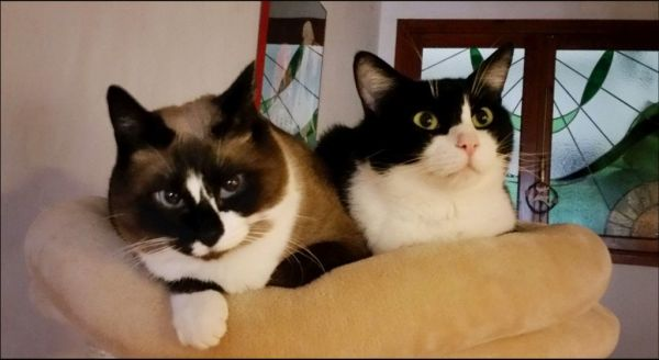 Xena & Felix -- Good Friends