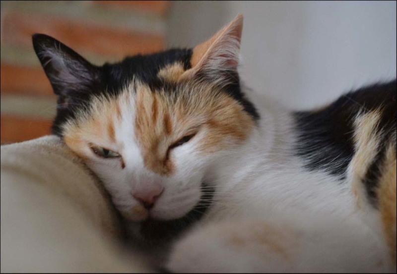 Jodi -  Sleepy Face