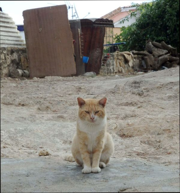 Cat Waiting for The Bait