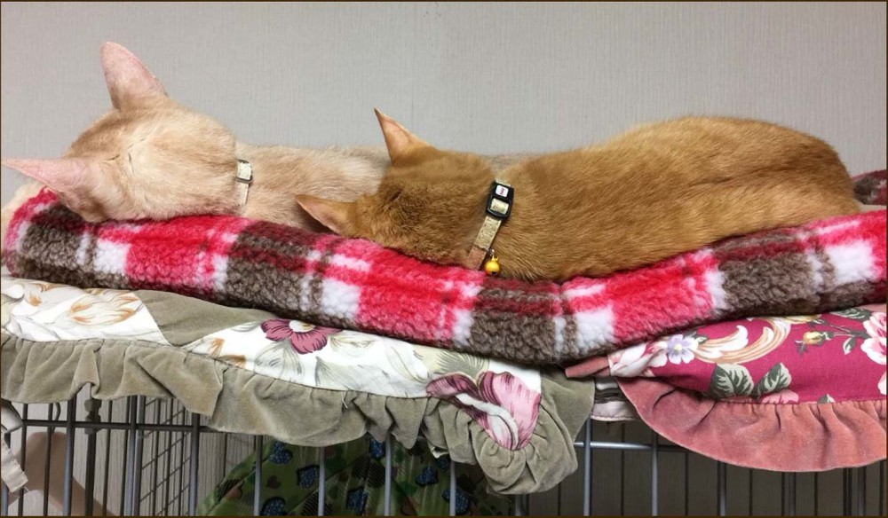 Tora & Moca's Sleeping Position.