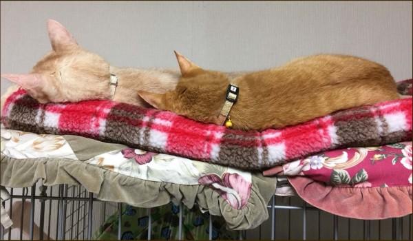Tora & Moca's Sleeping Position.