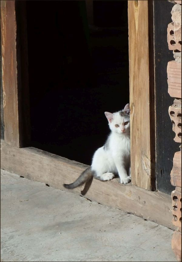 Kitten by The Door of The Brick Factory