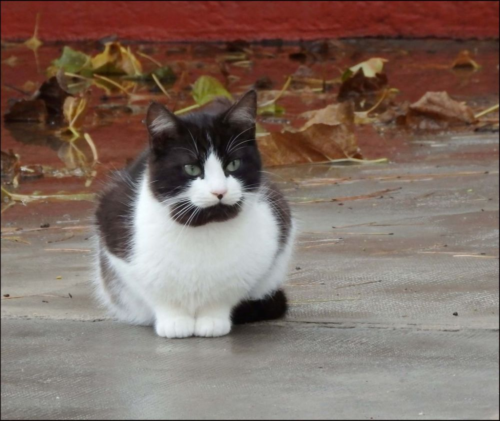 Kitten in Forna  After the Rainin