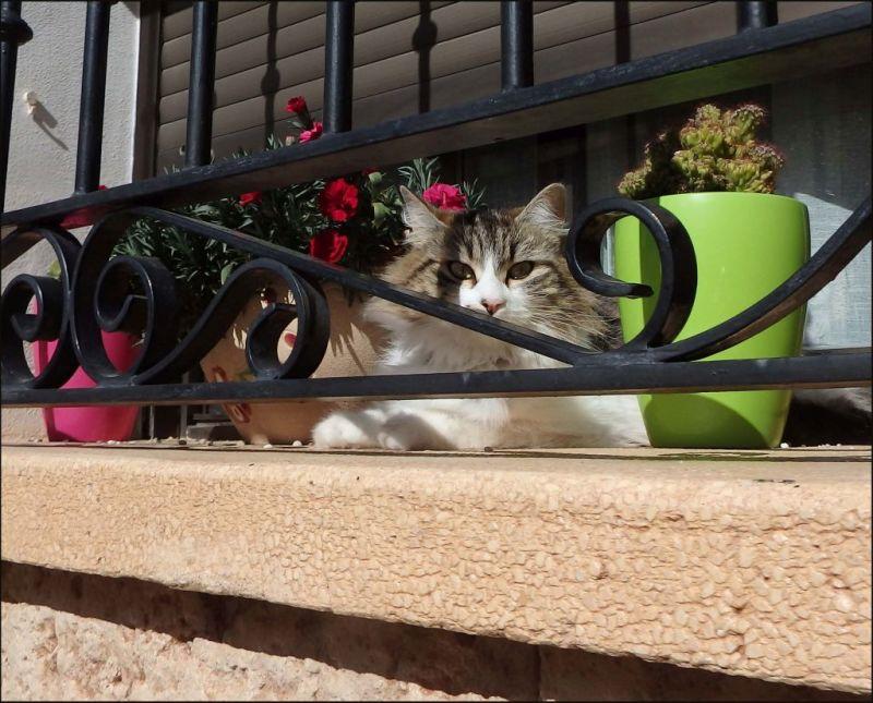kitten on the Veranda