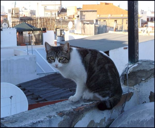 A little Visitor on My Roof Terrace