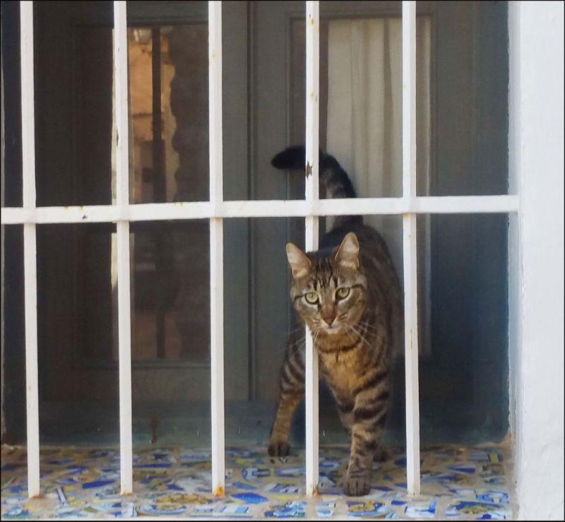Friendly Tabby Cat in Benirrama Village