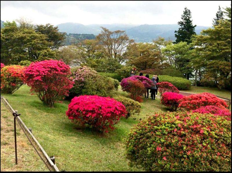 Azalea Festival in Odakyu Yamano Hotel