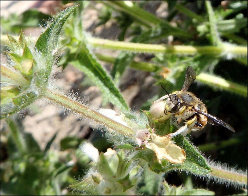 Honey Bee & Brambles