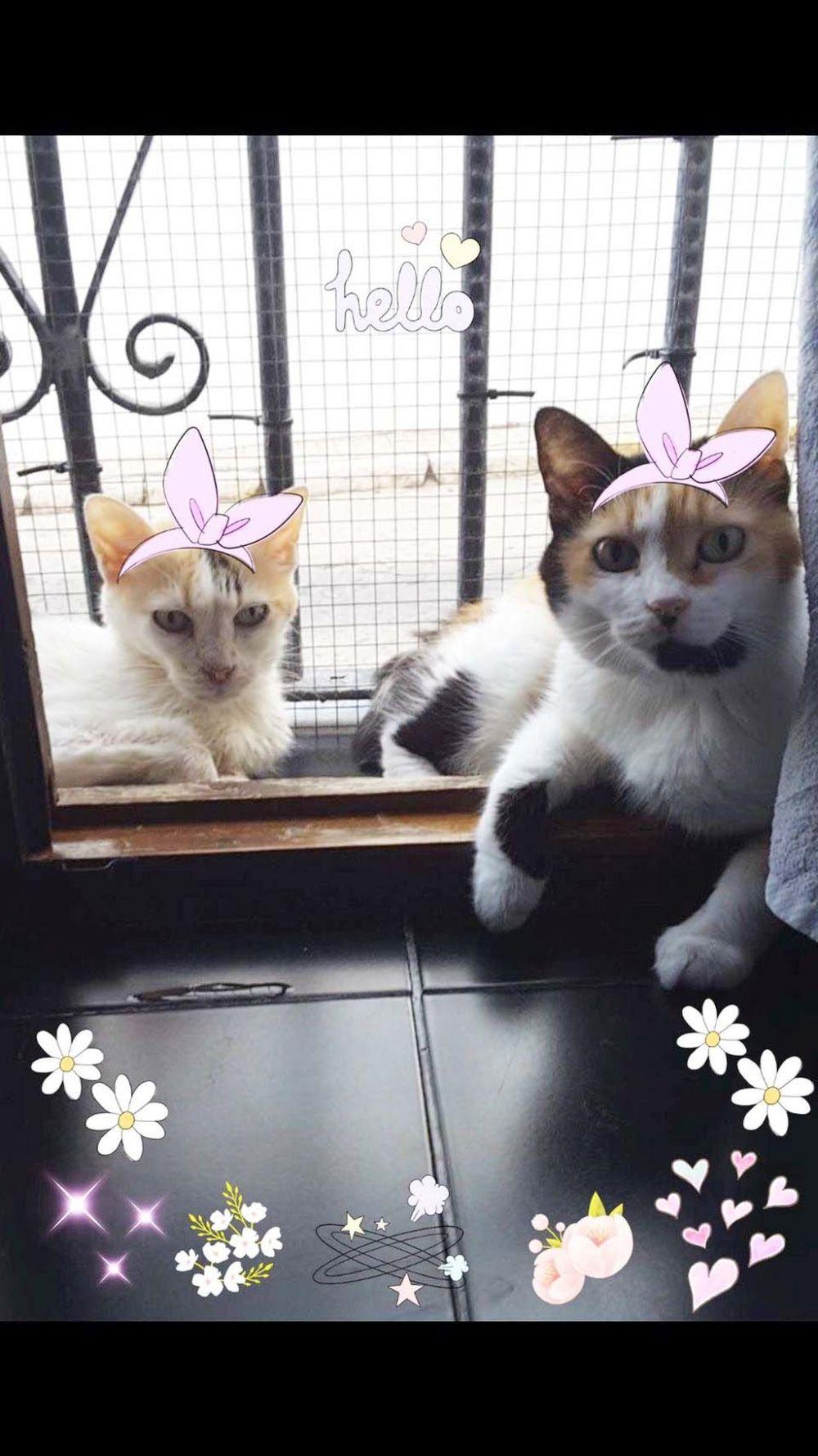 Birthday Cat Gimo & Jodi ~(=^・ω・^)_