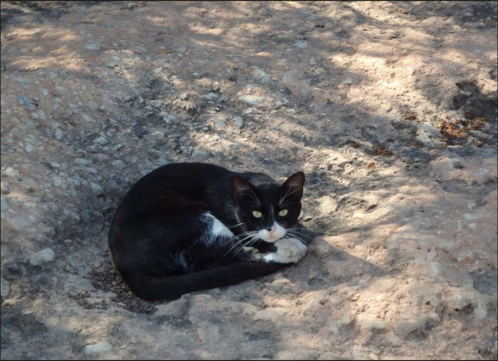 Cat in The Dried up  Riverbed
