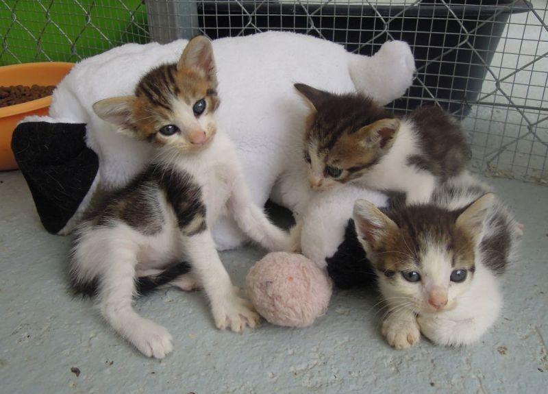 Kitten Sisters