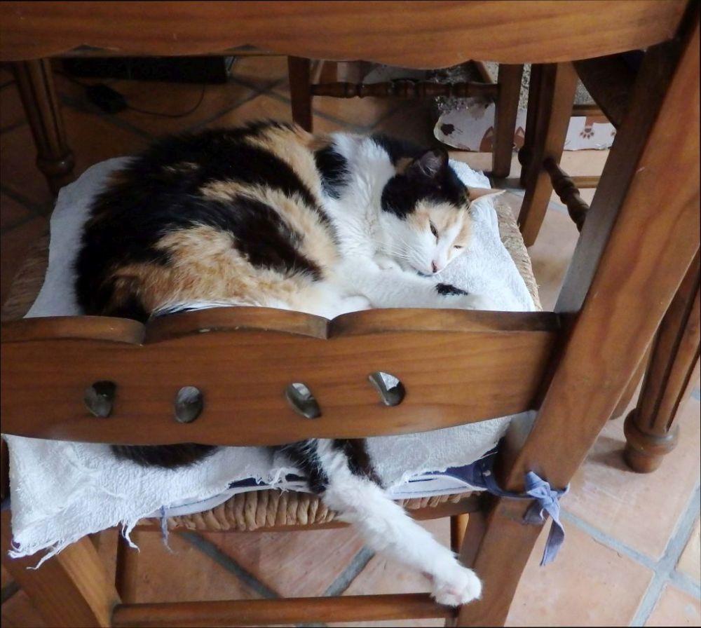 Jodi's Sleeping Position