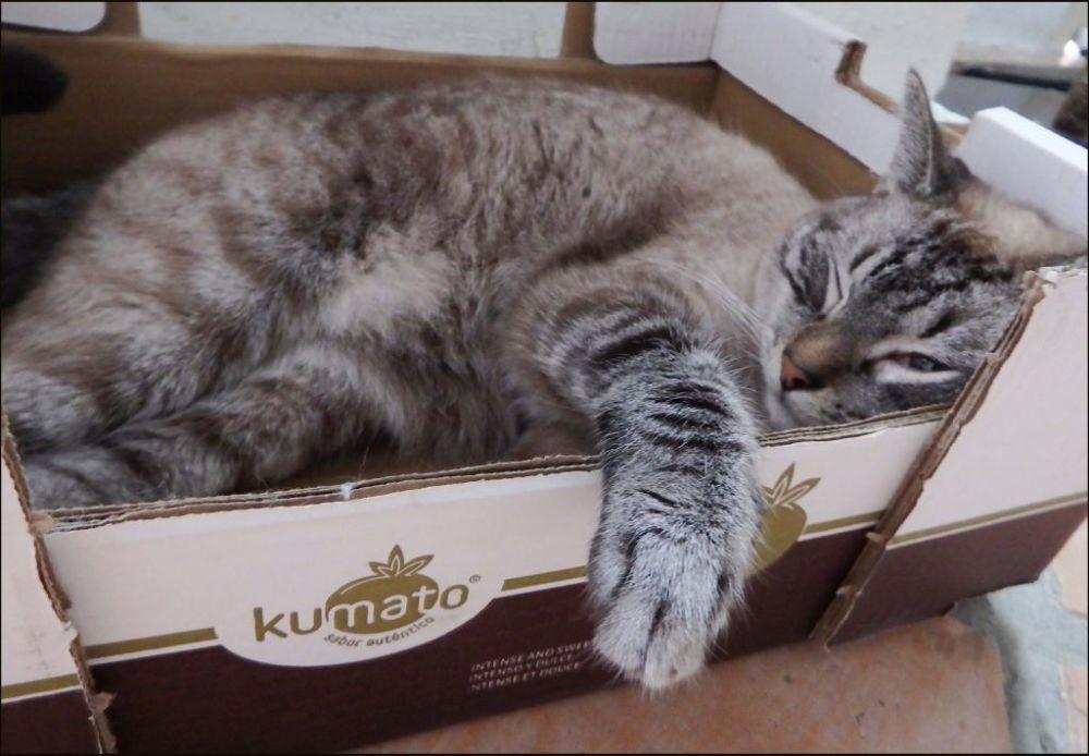 Kirin's Sleeping in His Favorite Box