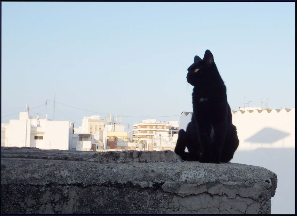 Black Cat in The shade at The Roof Terrace