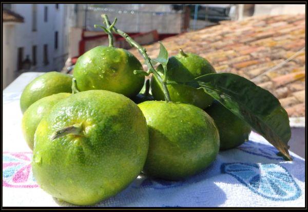 Seasonal Fruit - Freshly Picked Clementine