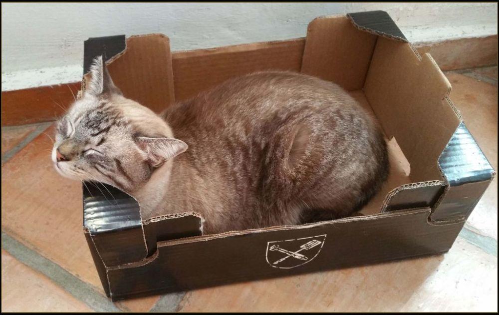 Kirin  -  Sleeping in His Favorite Box