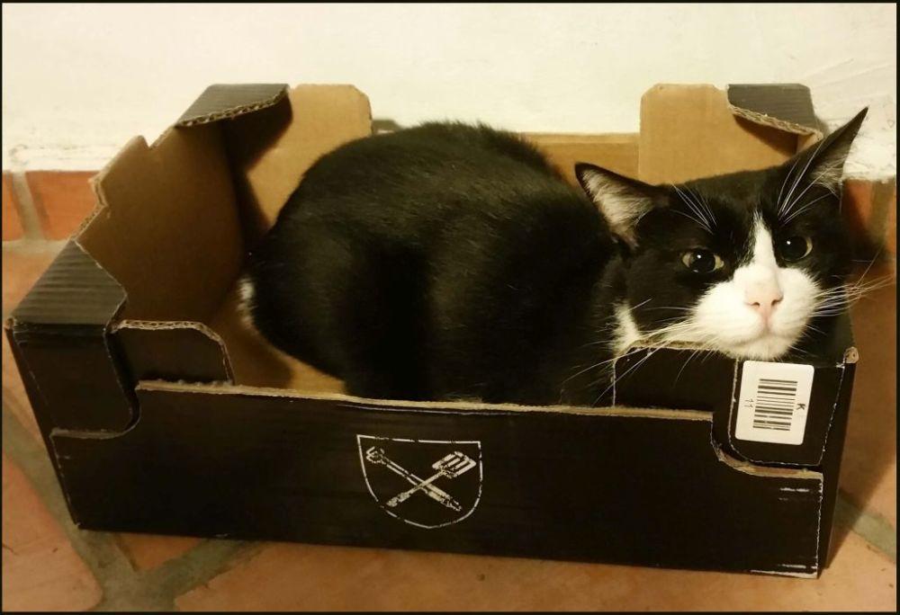 Felix in His Favourite Box