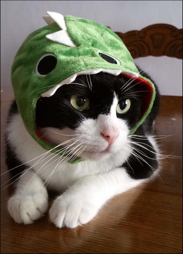 Felix in Shark Hat
