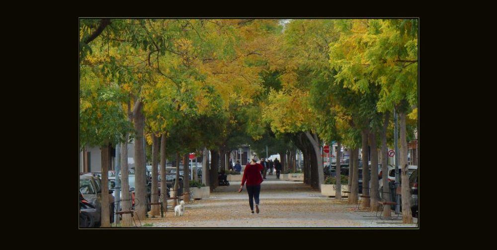 Promenade in The Late Autumn