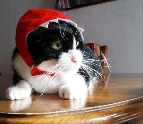 Felix in The Red Cap