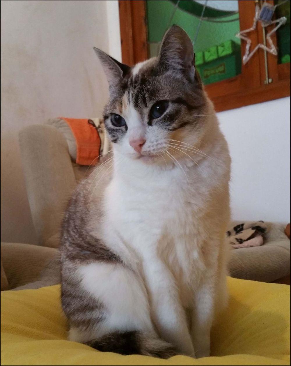 Birthday Cat  Coco (=◕ᆽ◕ฺ=)
