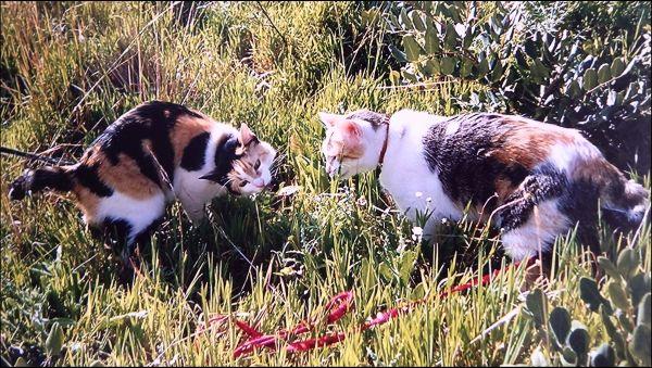 Cat Stroll Gimo & Jodi