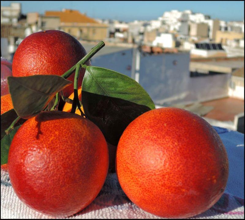 Seasonal Fruit - Freshly Picked Blood Oranges