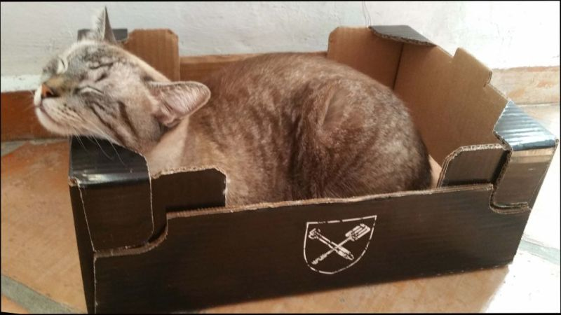 Kirin Sleeping in His Favourite Box