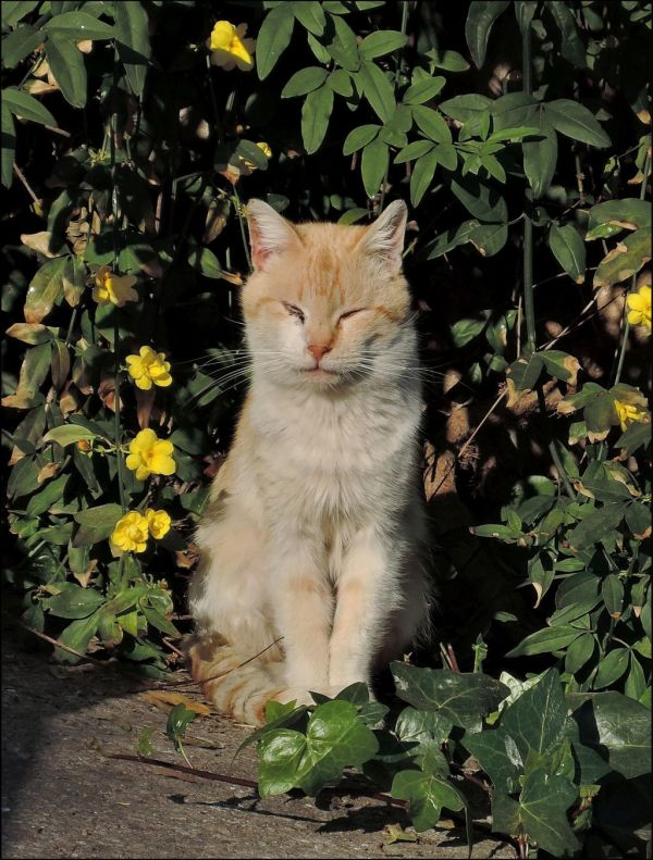 Ginger Cat in The  Sunny Place
