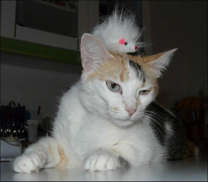 Gimo  & Her Toy Mouse