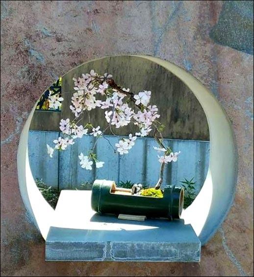 Bonsai - Weeping Cherry Blossoms
