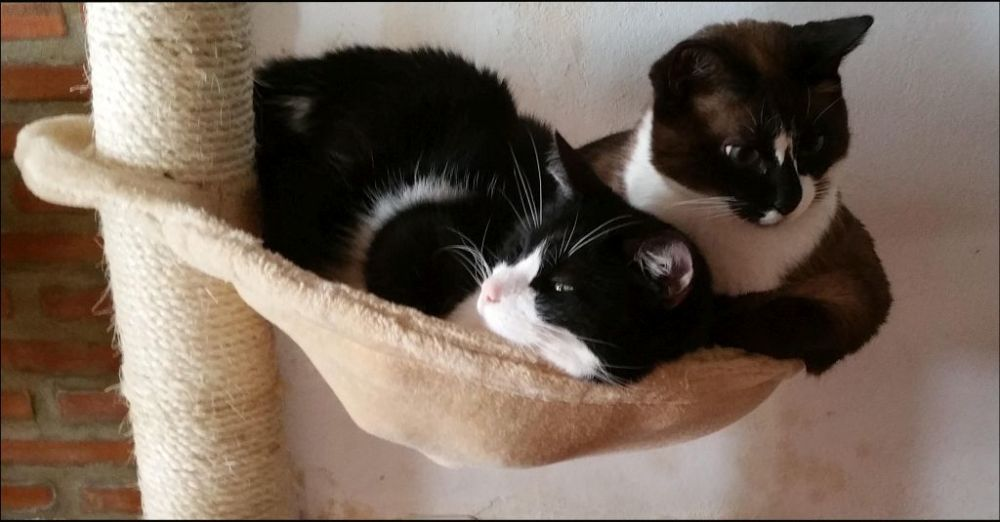 Xena & Felix in The Cat Tower Bed