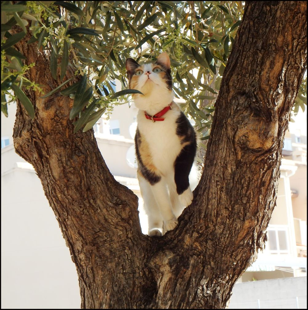 Cat at The Olive Tree