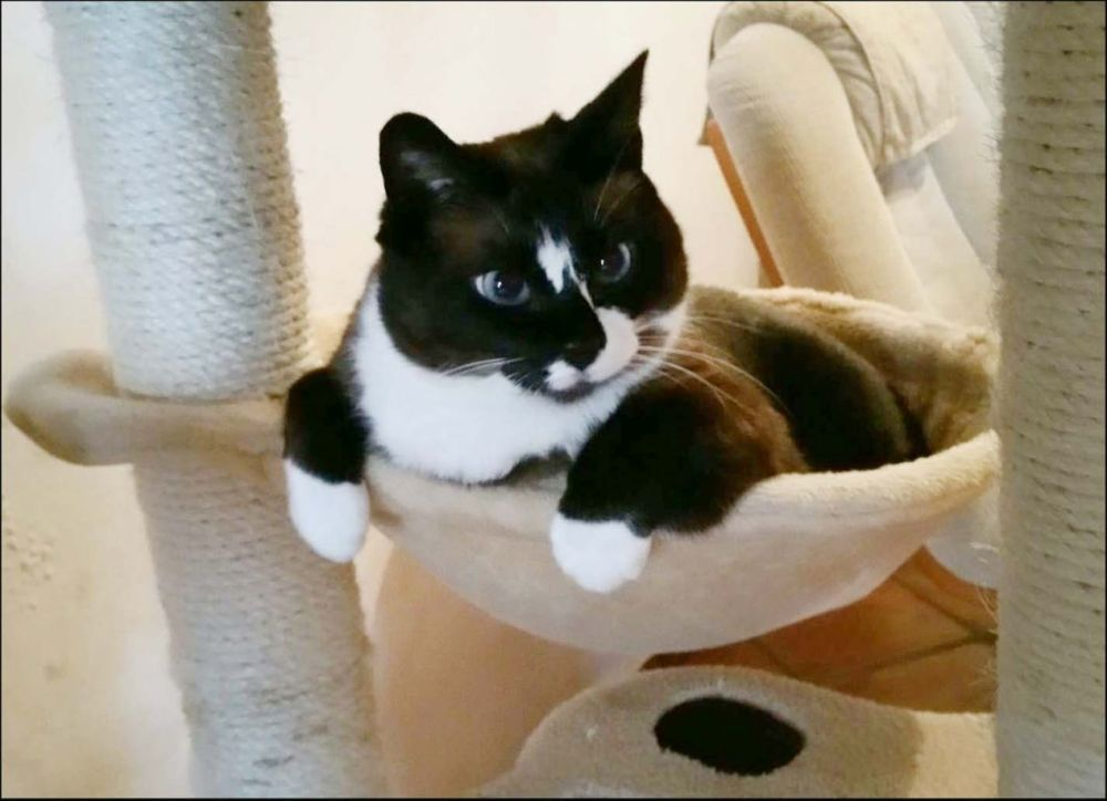 Xena in the Cat Tower Bed