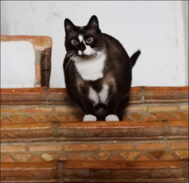 Xena on The Staircase