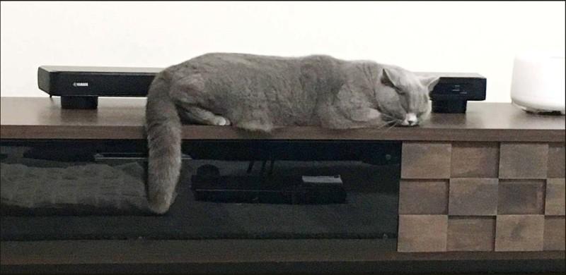 Buri chan - Taking a Nap